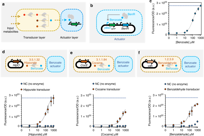 Metabolic perceptrons for neural computing in biological systems