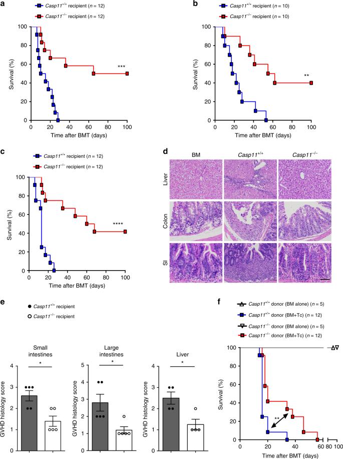 Caspase-11 signaling enhances graft-versus-host disease