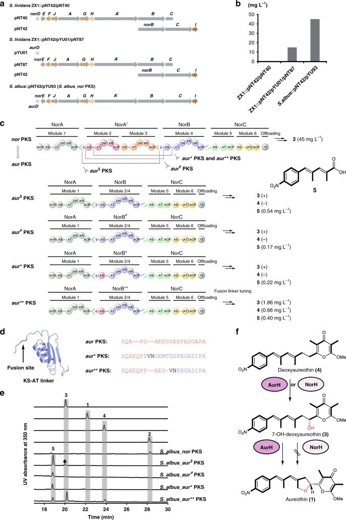 Emulating evolutionary processes to morph aureothin-type