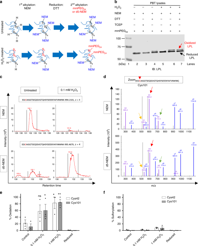 Spatial oxidation of L-plastin downmodulates actin-based functions of