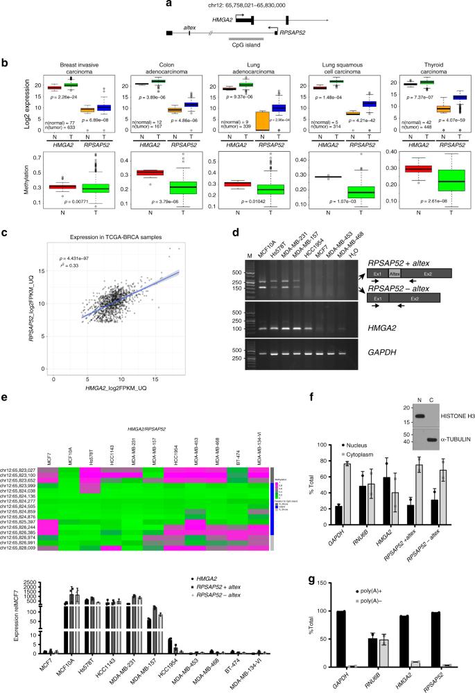 The transcribed pseudogene RPSAP52 enhances the oncofetal HMGA2-IGF2BP
