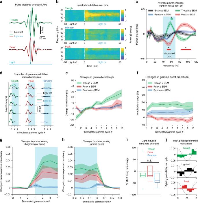 Closed-loop control of gamma oscillations in the amygdala