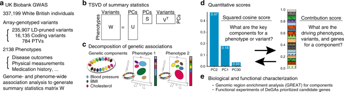Components of genetic associations across 2,138 phenotypes in the UK B
