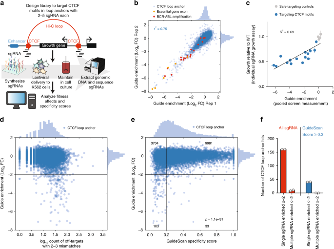 Mitigation of off-target toxicity in CRISPR-Cas9 screens for essential