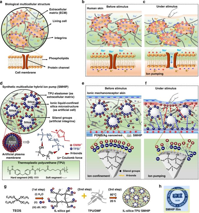 A bioinspired hydrogen bond-triggered ultrasensitive ionic mechanorece