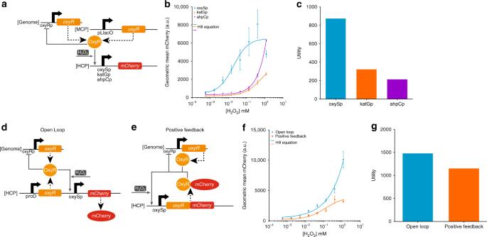 Gene networks that compensate for crosstalk with crosstalk