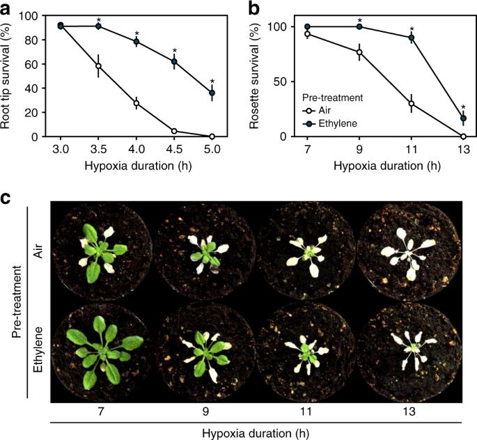 Ethylene-mediated nitric oxide depletion pre-adapts plants to hypoxia