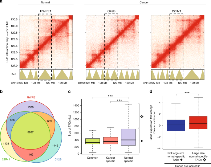 A high-resolution 3D epigenomic map reveals insights into the creation