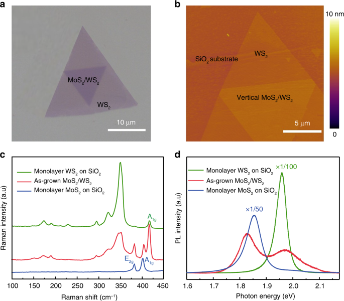 Enhancing and controlling valley magnetic response in MoS 2 /WS 2 hete