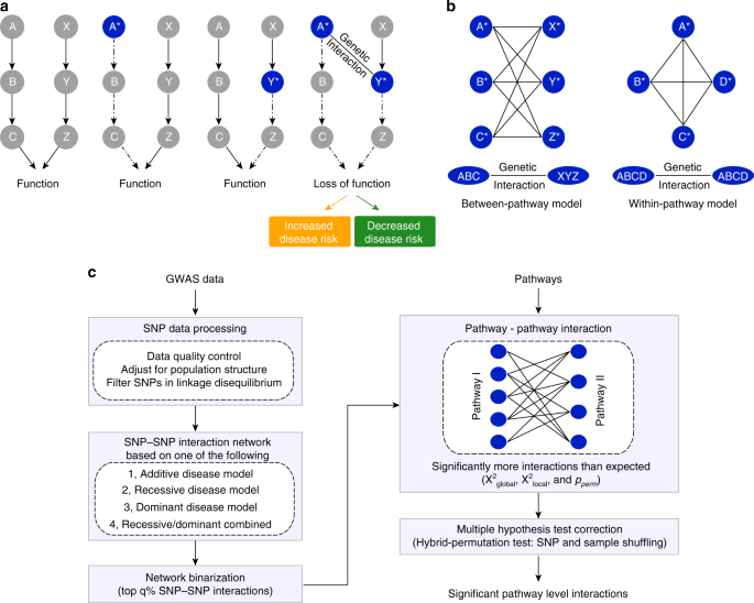 Discovering genetic interactions bridging pathways in genome-wide asso