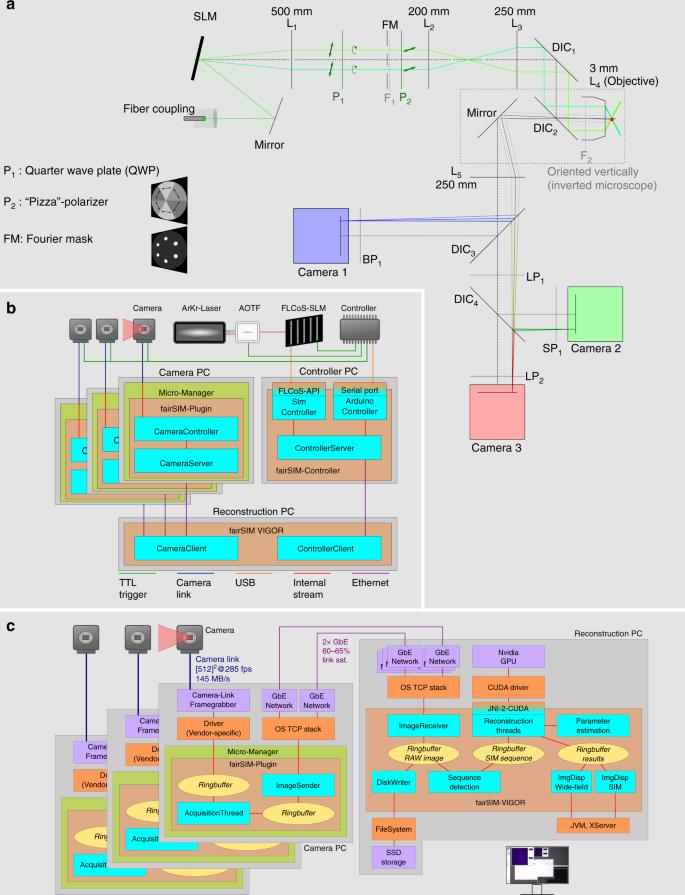 Video-rate multi-color structured illumination microscopy with simulta