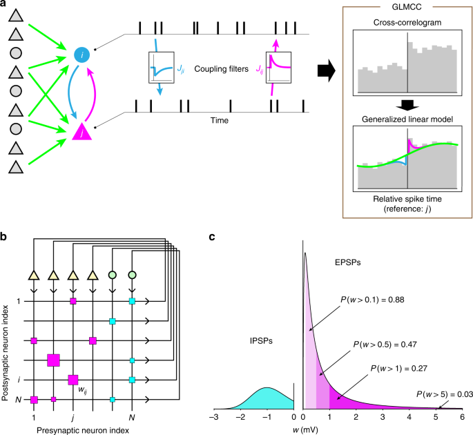 Reconstructing neuronal circuitry from parallel spike trains