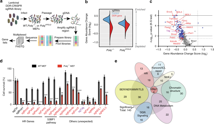 Genetic determinants of cellular addiction to DNA polymerase theta