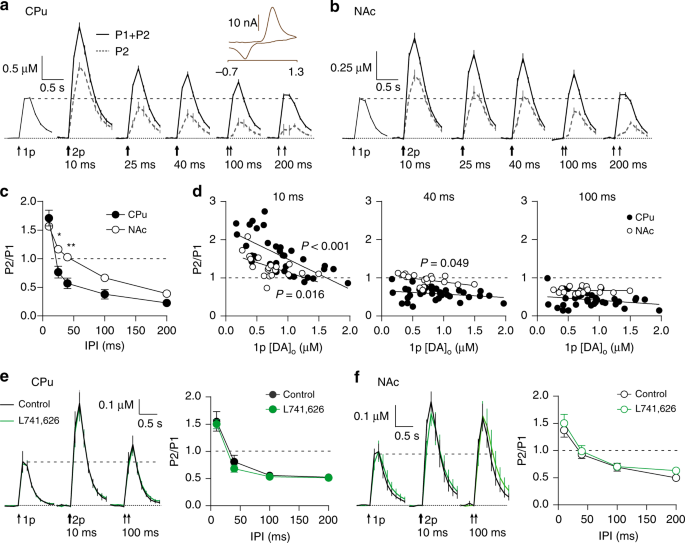 Plasticity in striatal dopamine release is governed by release-indepen