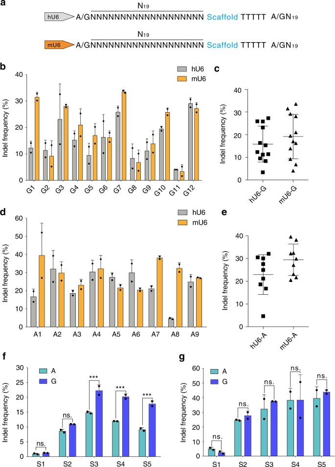 Optimized CRISPR guide RNA design for two high-fidelity Cas9 variants