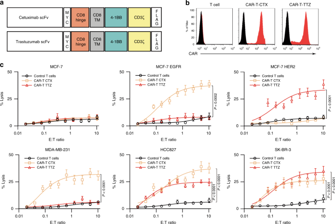 CAR exosomes derived from effector CAR-T cells have potent antitumour