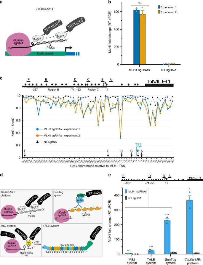 Enhanced CRISPR-based DNA demethylation by Casilio-ME-mediated RNA-gui