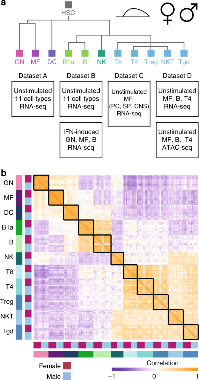 ImmGen report: sexual dimorphism in the immune system transcriptome