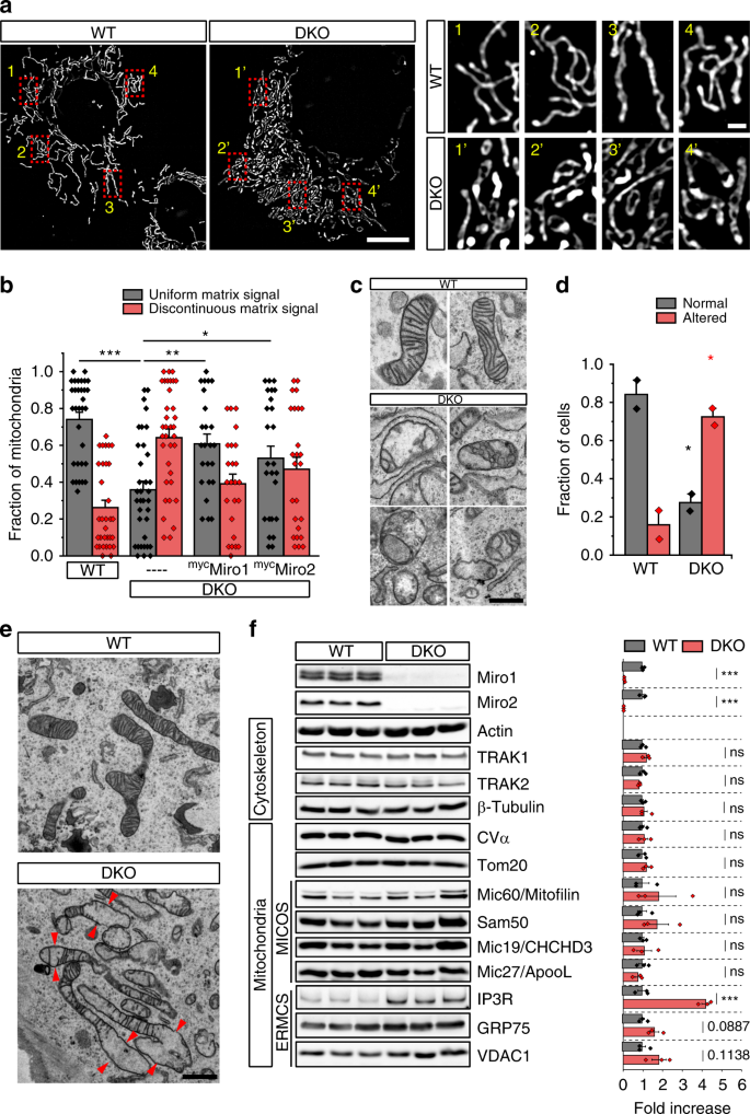Miro clusters regulate ER-mitochondria contact sites and link cristae