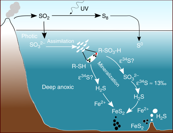 Organic sulfur was integral to the Archean sulfur cycle