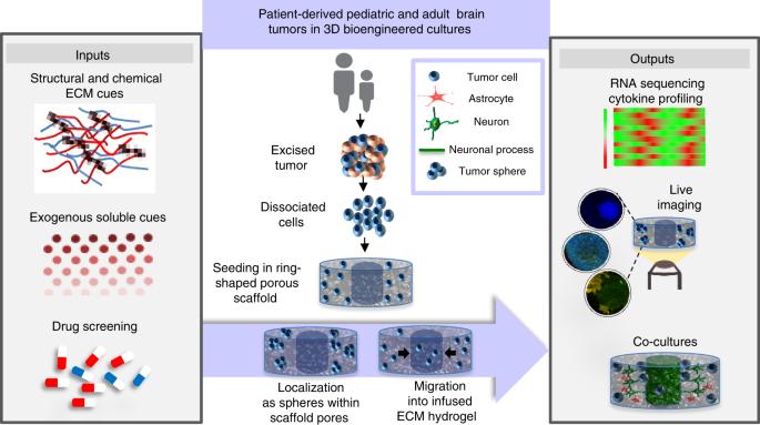 3D extracellular matrix microenvironment in bioengineered tissue model