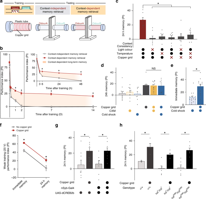 Long-term memory is formed immediately without the need for protein sy