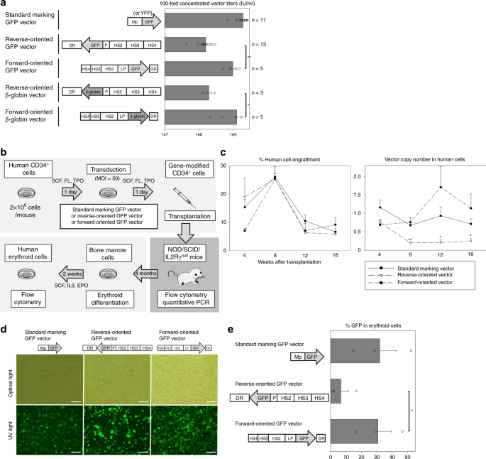 Development of a forward-oriented therapeutic lentiviral vector for he