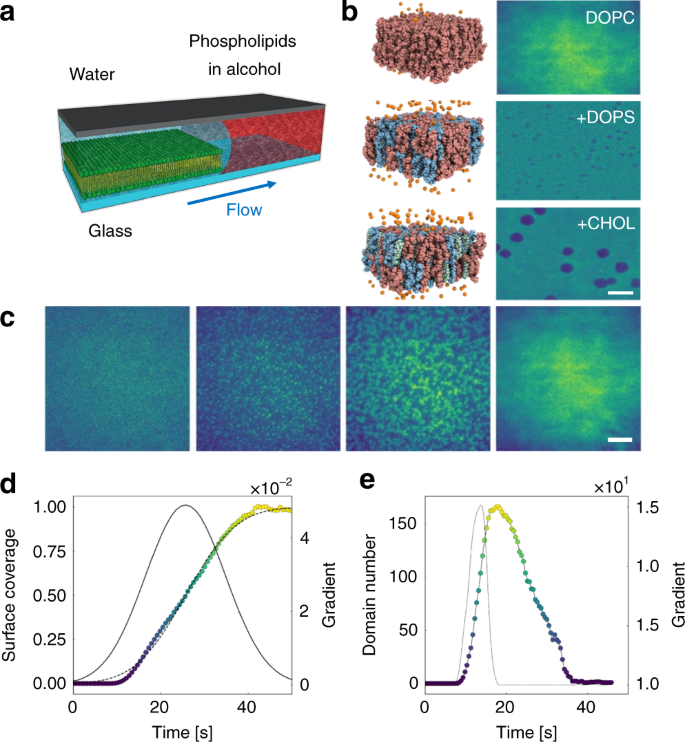 Fusion dynamics of cubosome nanocarriers with model cell membranes