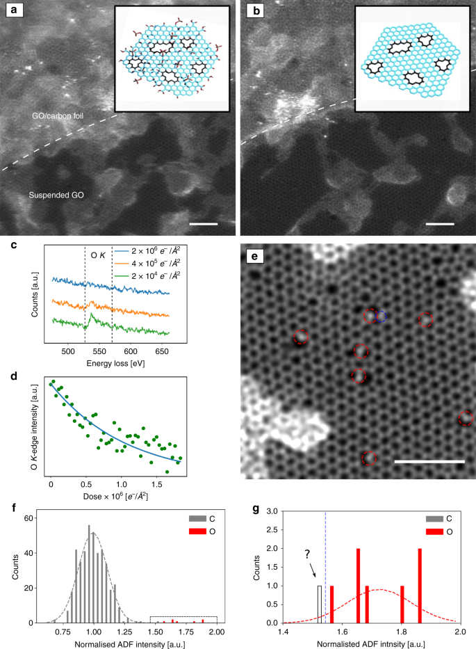 Direct imaging of light-element impurities in graphene reveals triple-