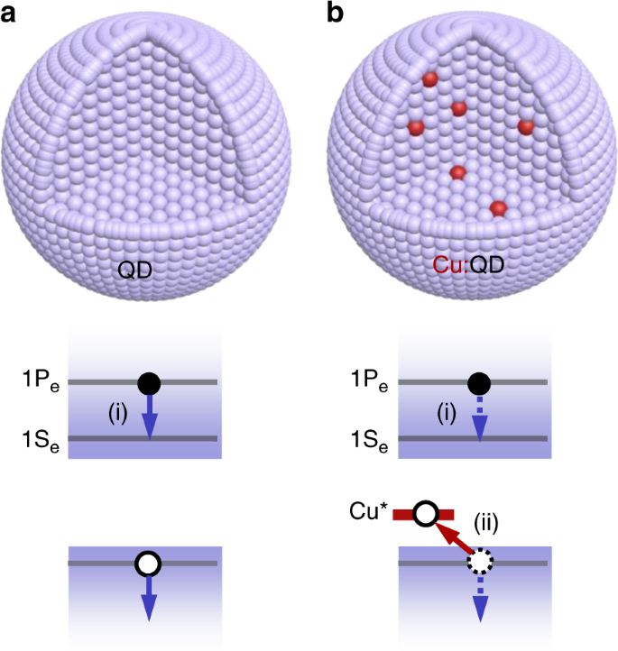 Observation of a phonon bottleneck in copper-doped colloidal quantum d