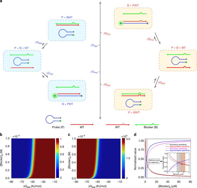 Thermodynamics and kinetics guided probe design for uniformly sensitiv
