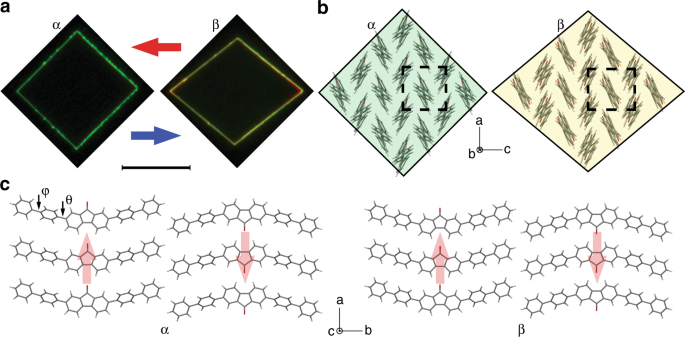 Robust thermoelastic microactuator based on an organic molecular cryst