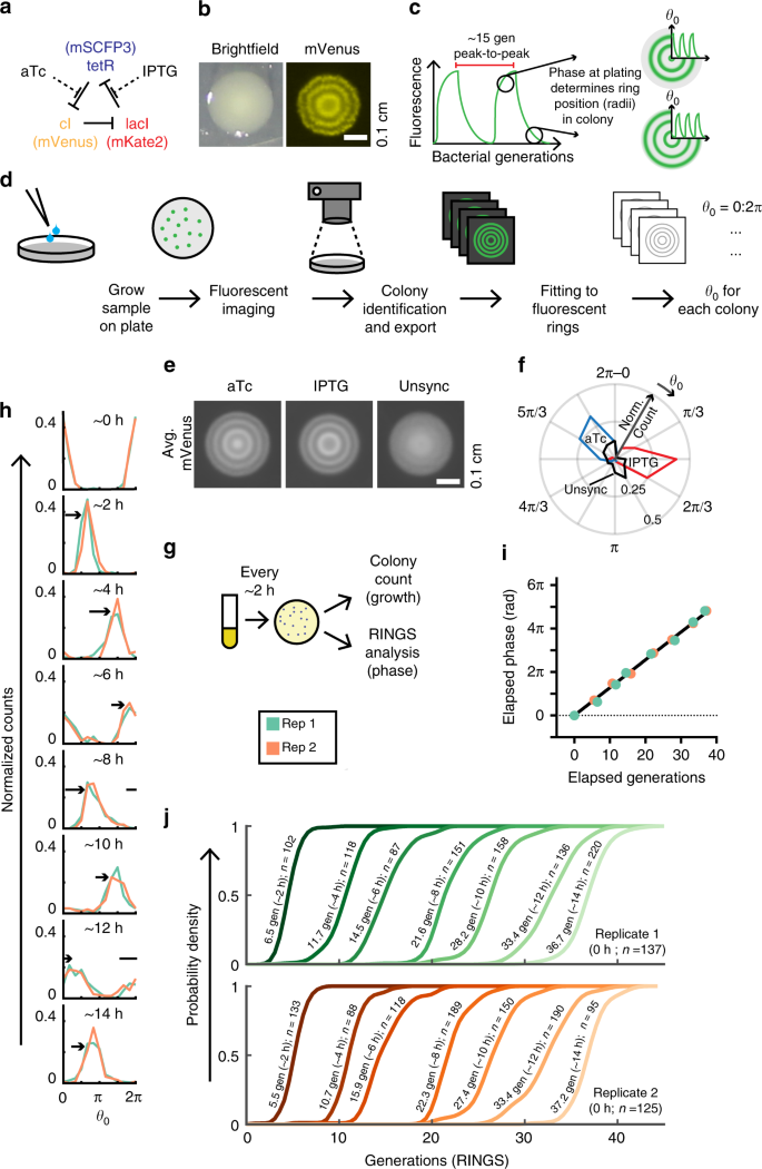 Array - bacterial variability in the mammalian gut captured by a      rh   nature com