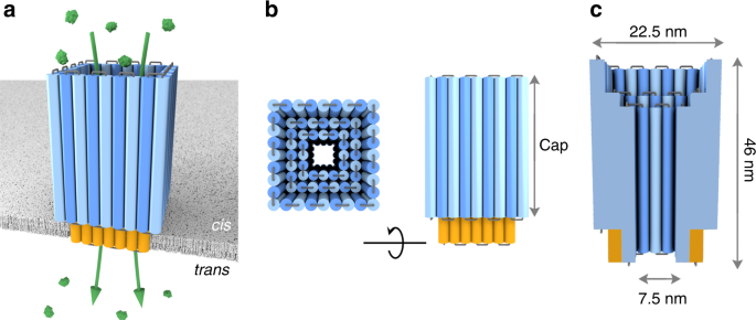 Synthetic protein-conductive membrane nanopores built with DNA