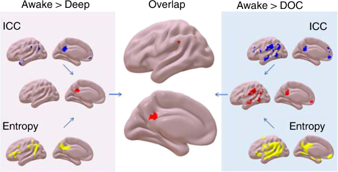 Consciousness-specific dynamic interactions of brain integration and f