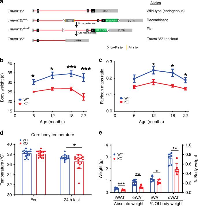The tumor suppressor TMEM127 regulates insulin sensitivity in a tissue