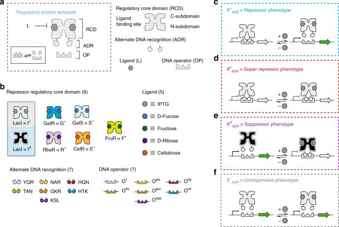Transcriptional programming using engineered systems of transcription