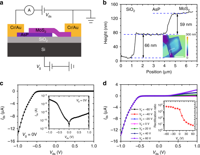 High efficiency and fast van der Waals hetero-photodiodes with a unila