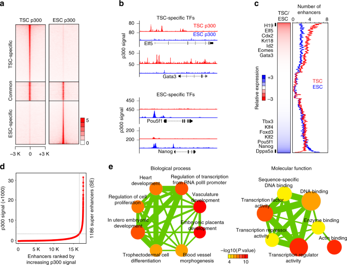 Super-enhancer-guided mapping of regulatory networks controlling mouse