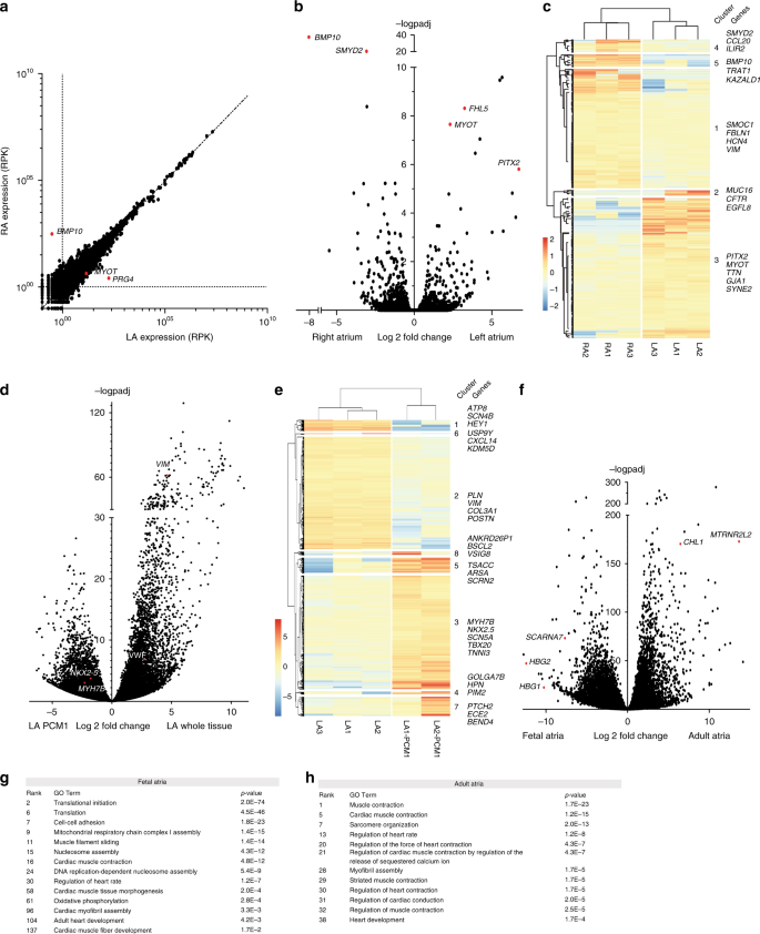 Identification of atrial fibrillation associated genes and functional
