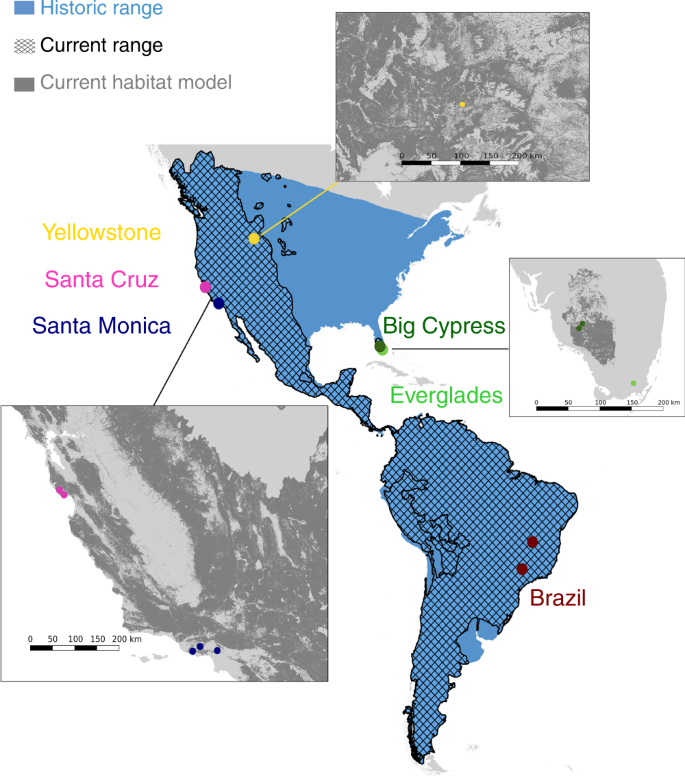Puma genomes from North and South America provide insights into the ge