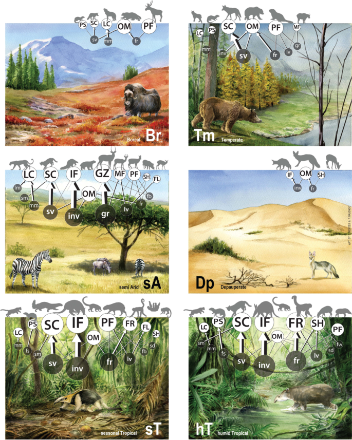 Climate shapes mammal community trophic structures and humans simplify