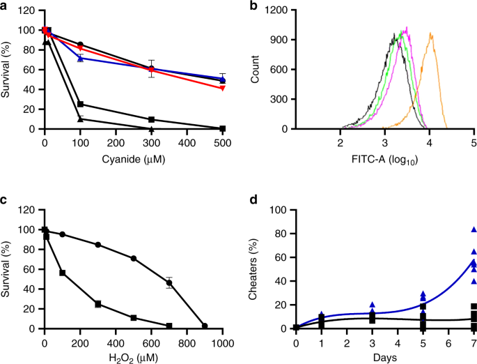 Conditional quorum-sensing induction of a cyanide-insensitive terminal