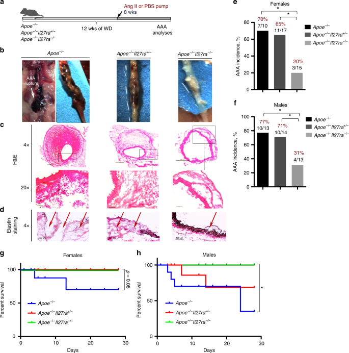 IL-27 receptor-regulated stress myelopoiesis drives abdominal aortic a