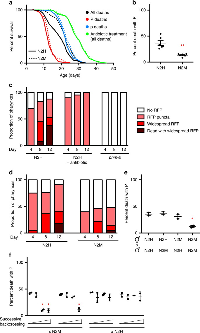 A fln-2 mutation affects lethal pathology and lifespan in C. elegans