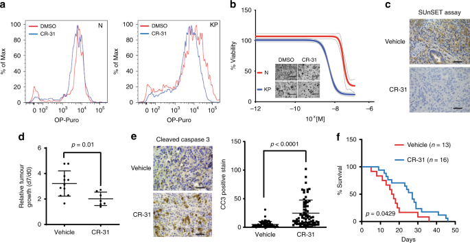 eIF4A supports an oncogenic translation program in pancreatic ductal a