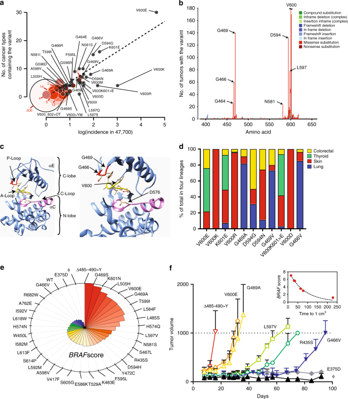 Clonal selection confers distinct evolutionary trajectories in BRAF -d
