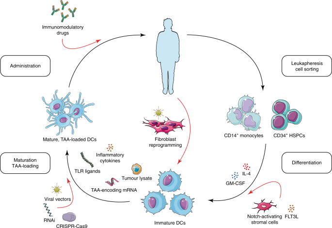Engineering dendritic cell vaccines to improve cancer immunotherapy |  Nature Communications