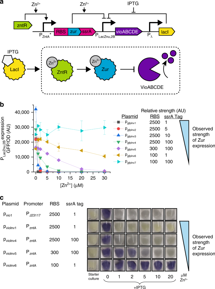 41467_2019_13454_Fig1_HTML Dynamic and tunable metabolite management for strong minimal-equipment evaluation of serum zinc