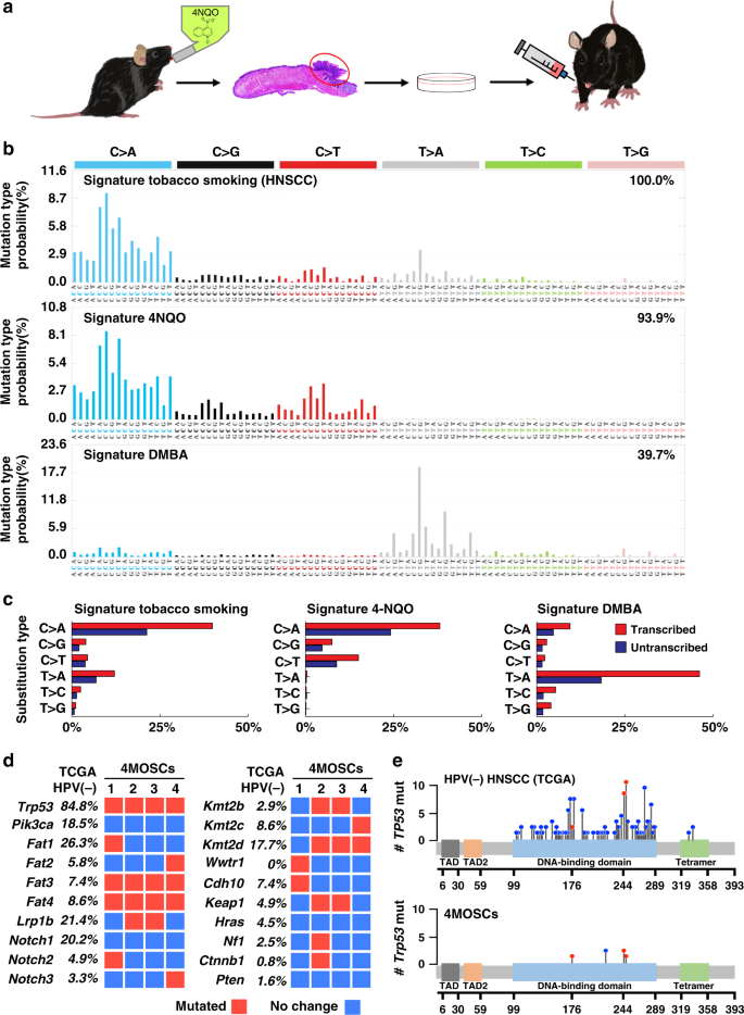 Syngeneic animal models of tobacco-associated oral cancer reveal the a